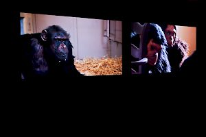 CINEMA FOR PRIMATES: Rachel Mayeri
